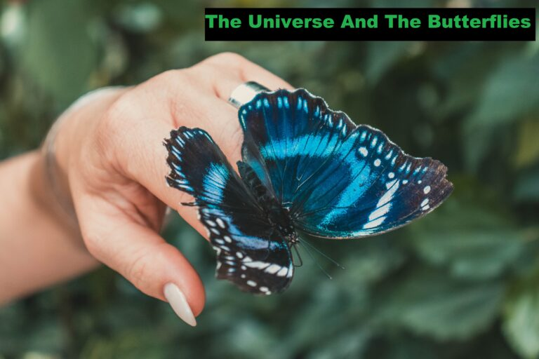 Relation The Universe And The Butterflies
